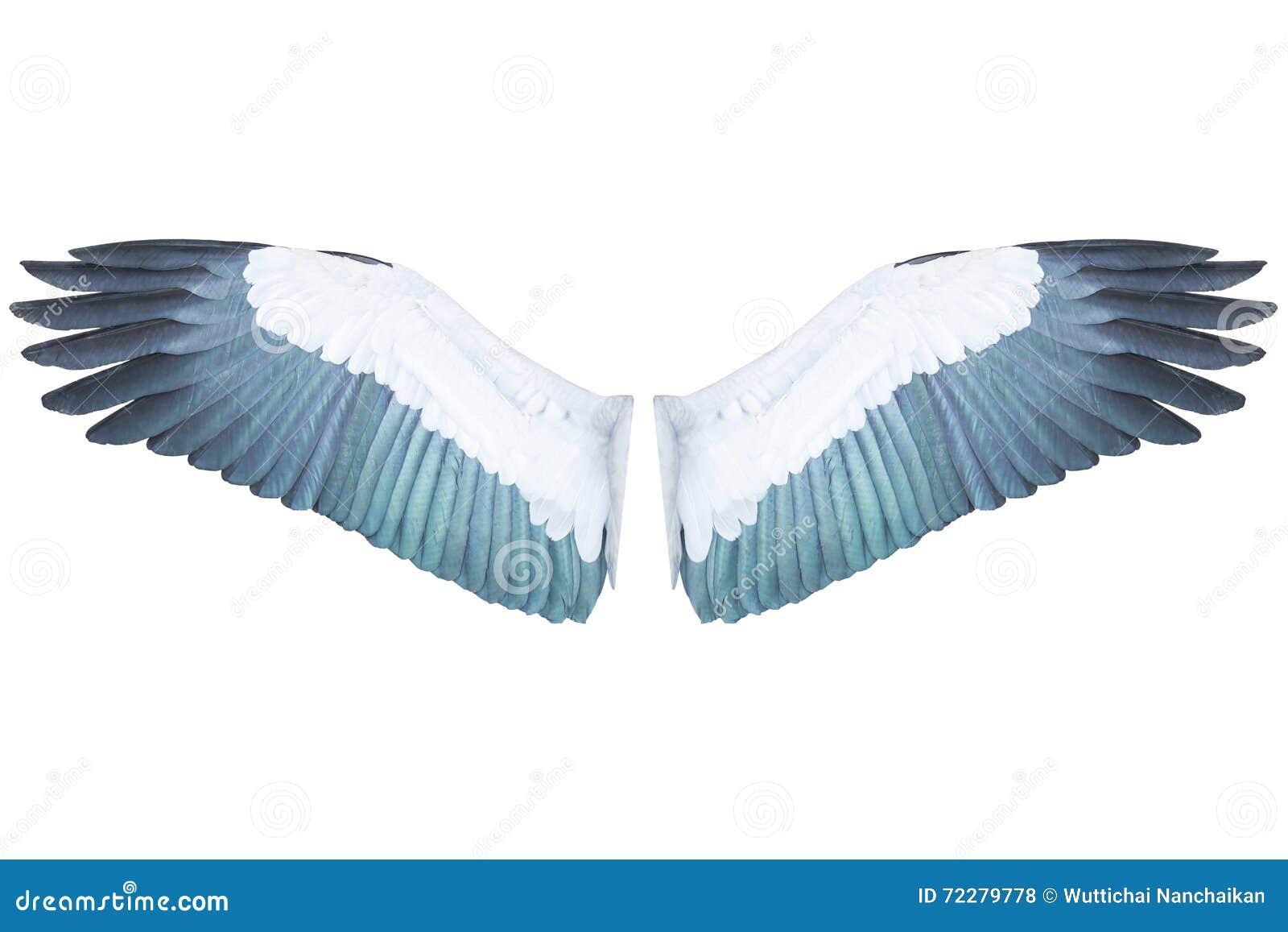 Vogelflügel Lokalisiert Auf Weißem Hintergrund Stockfoto - Bild von ...