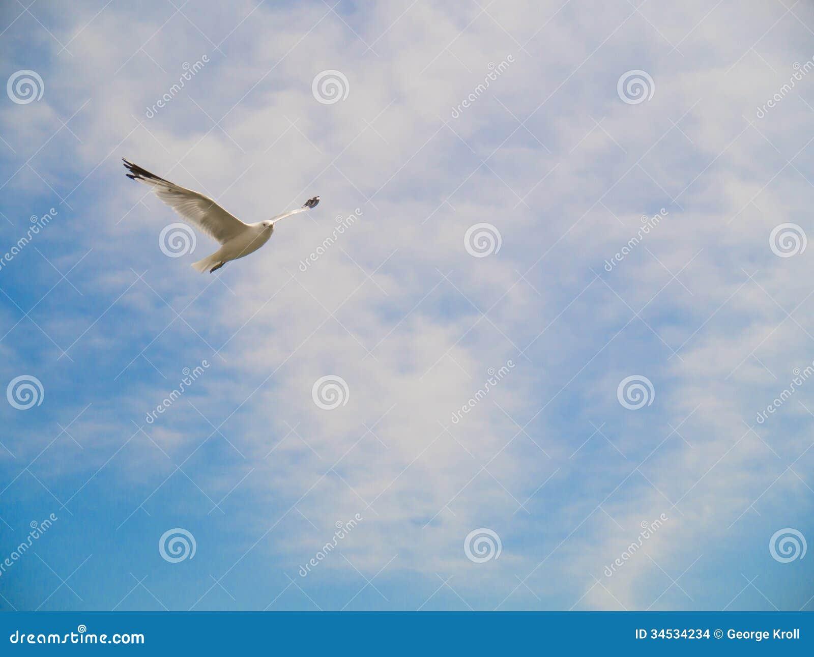 Vogelfliegen im blauen Himmel