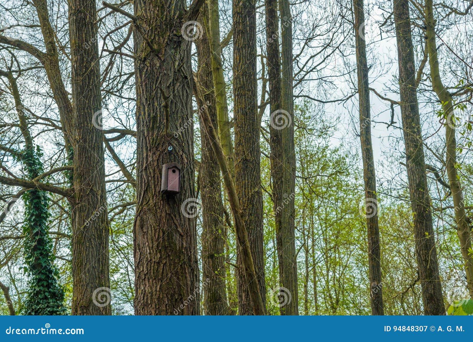 Vogelhaus in einem Wald