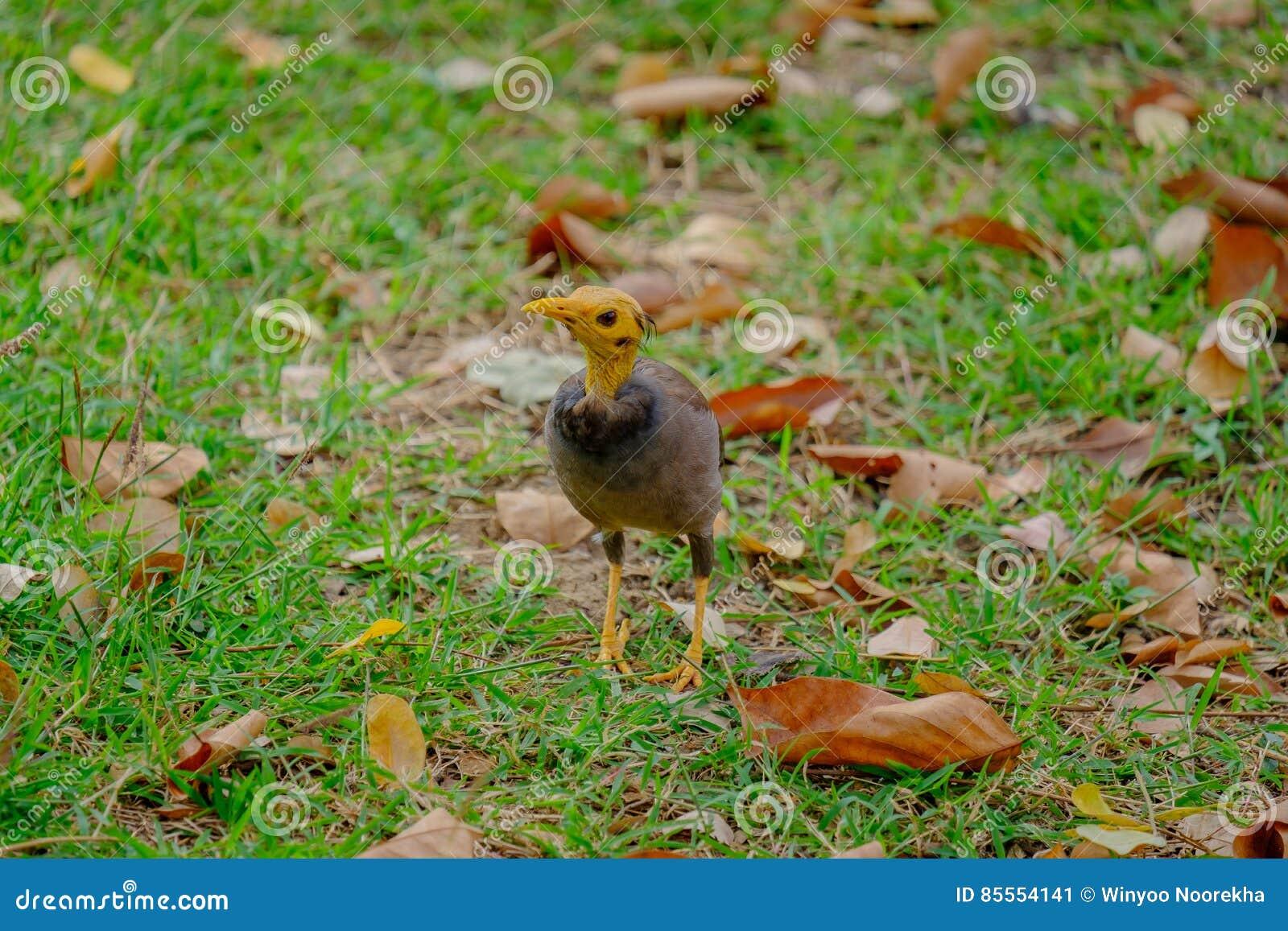 Vogelherumsuchenweg