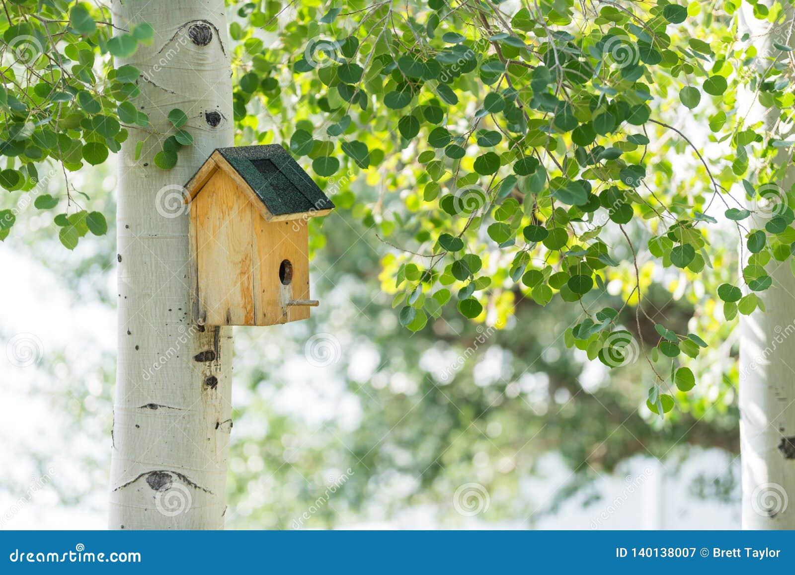 Vogelhuis in bosje van schokkende espen