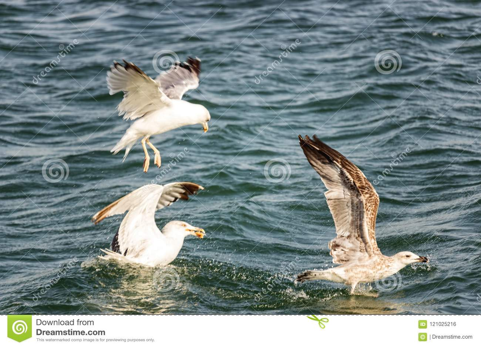 Vogelkampf für Lebensmittel