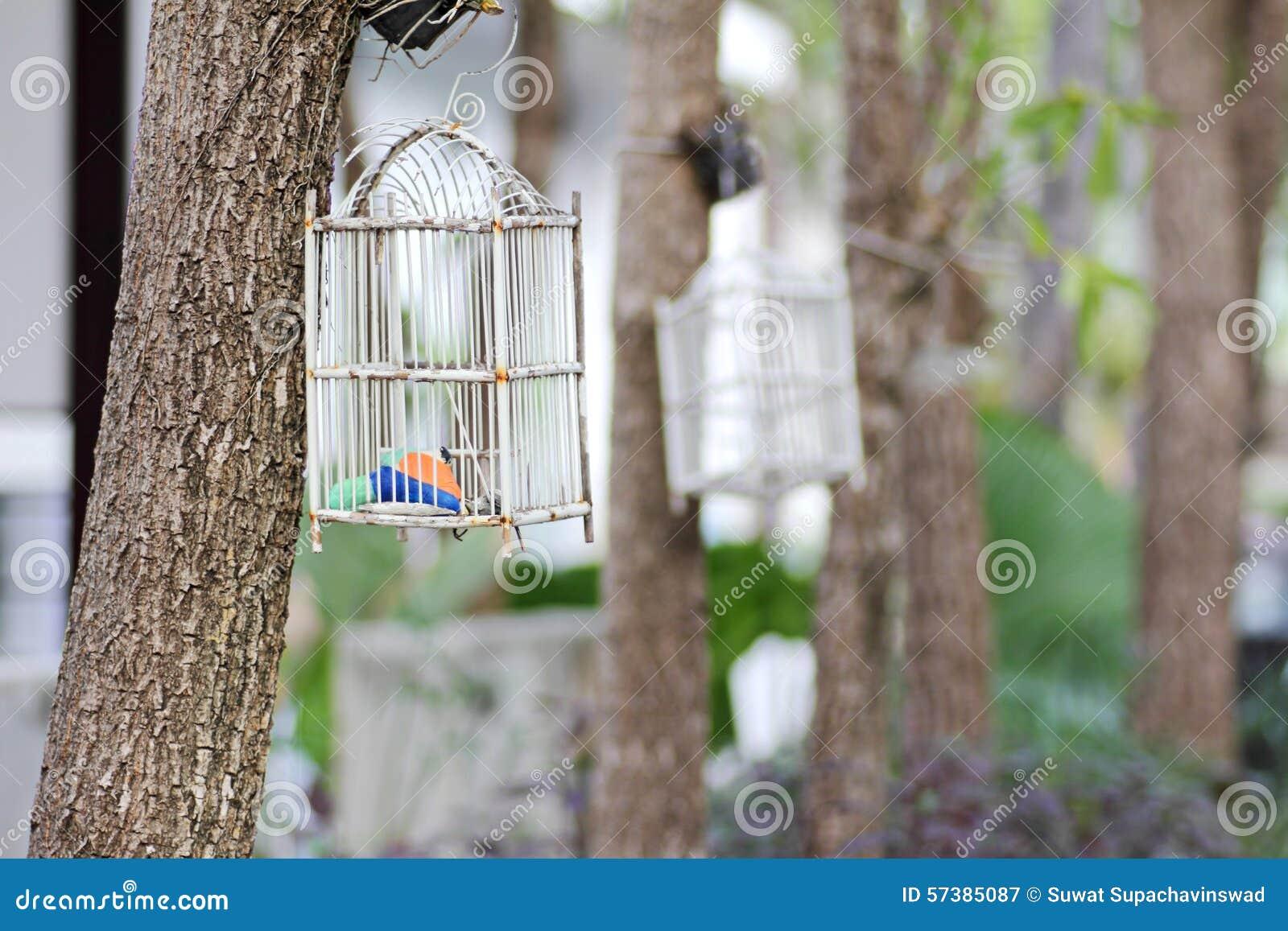 Vogelkooi