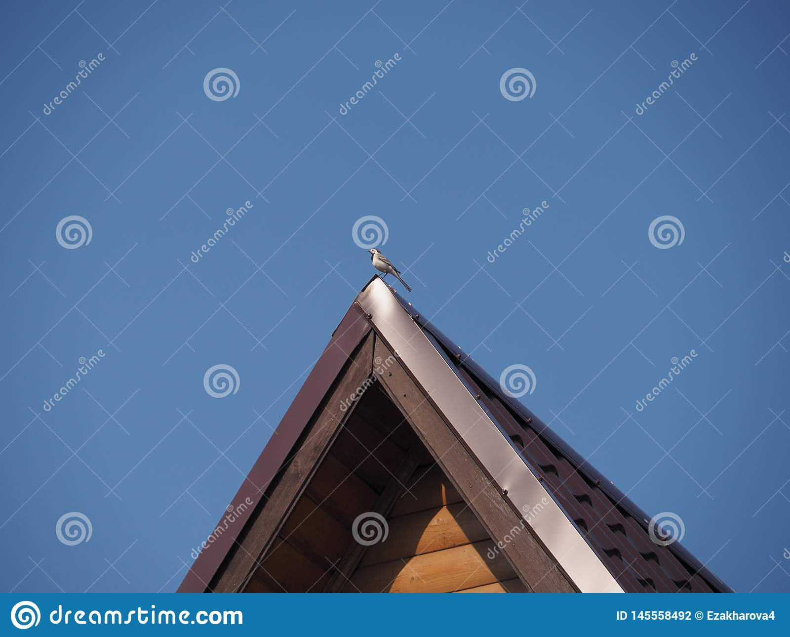 Vogelkwikstaart op de rand van het dak van het huis in de blauwe hemel