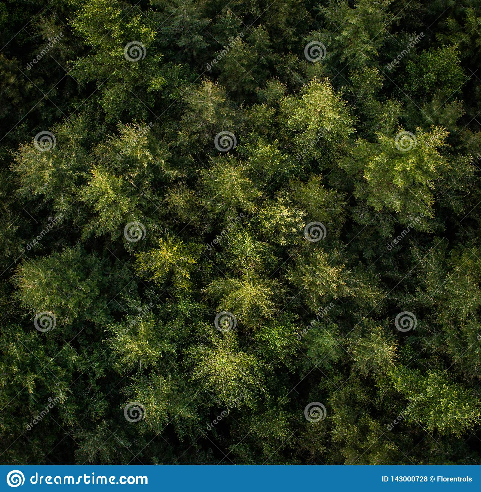 Vogelperspektive von Bäumen in einem Wald