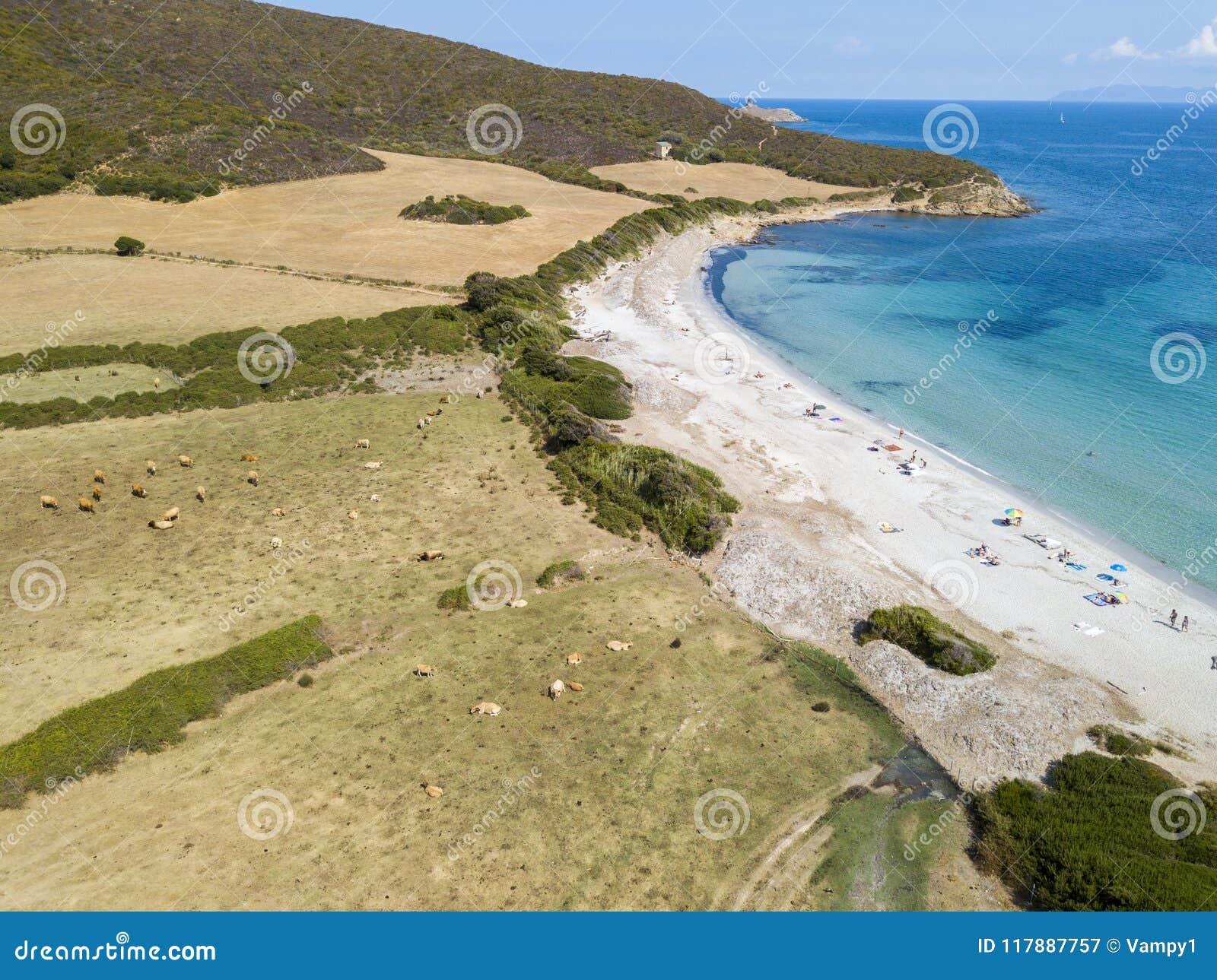 Vogelperspektive von Tamarone-Strand, Plage de Tamarone, schüchtert das Weiden lassen auf einer grasartigen Wiese nahe dem Meer e