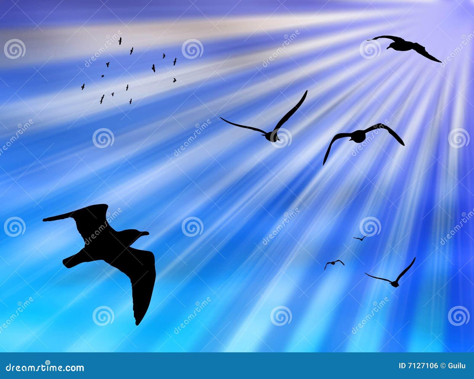 Vogels in de zon