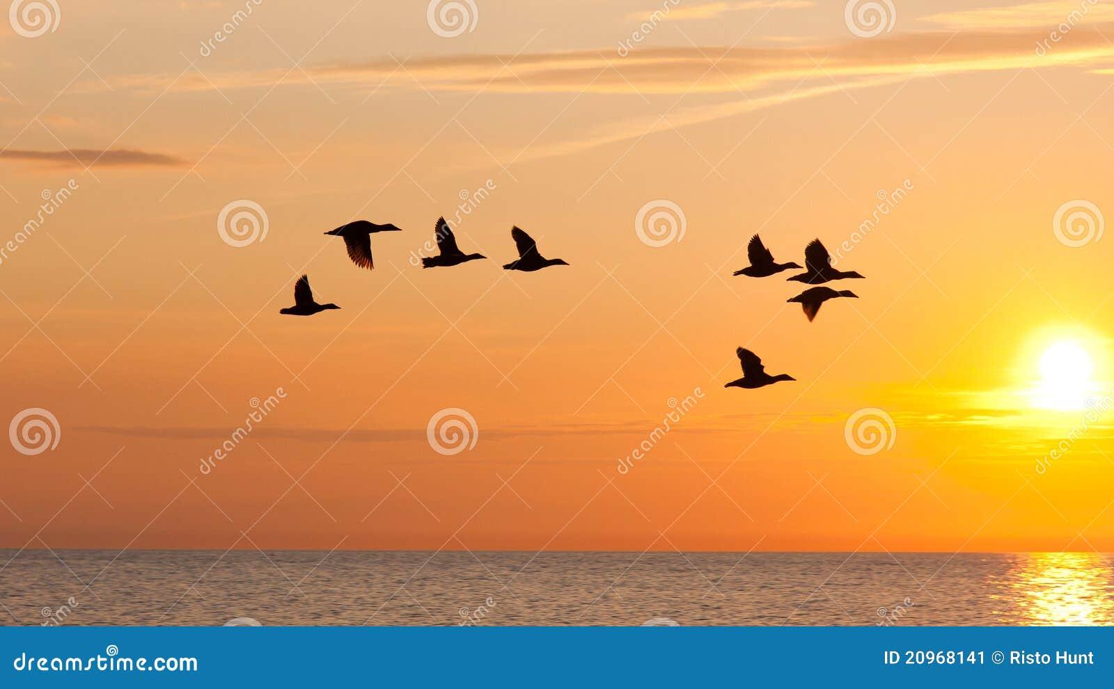 Vogels die in de hemel bij zonsondergang vliegen