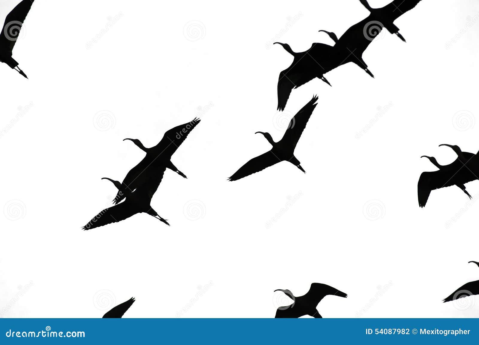 Vogels die Geïsoleerde Sihouette vliegen