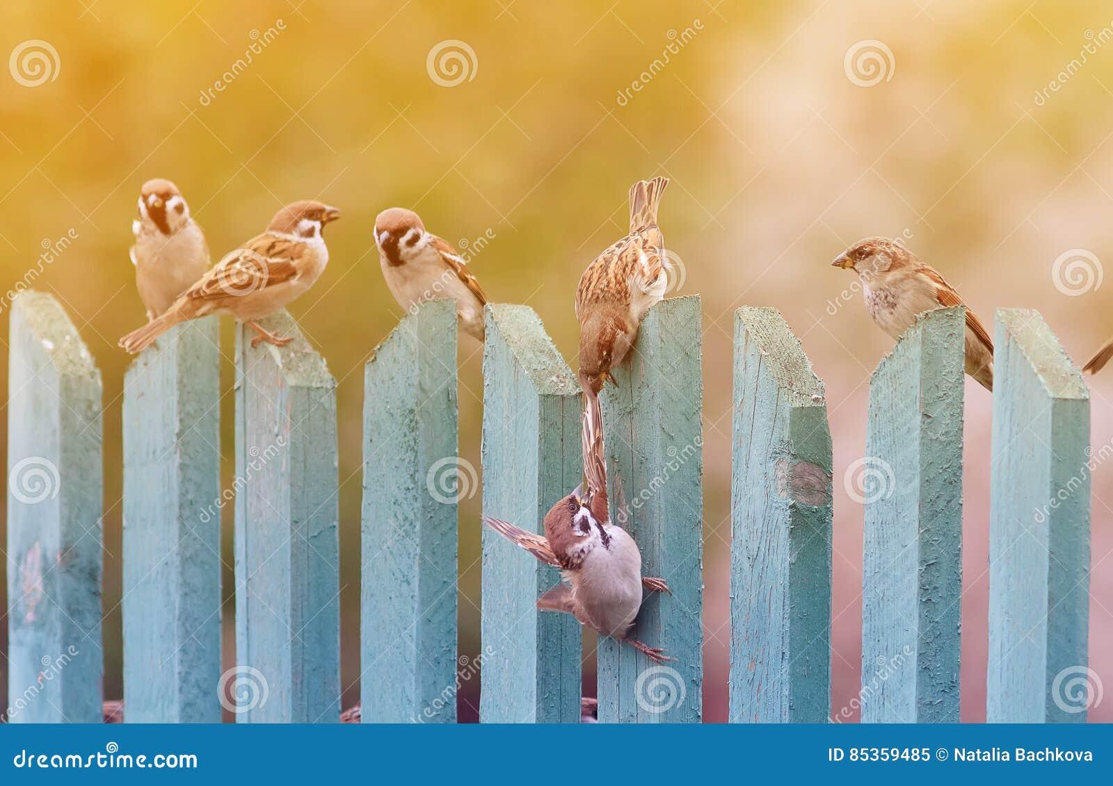 Vogels die lawaaierig op een oude houten omheining spelen