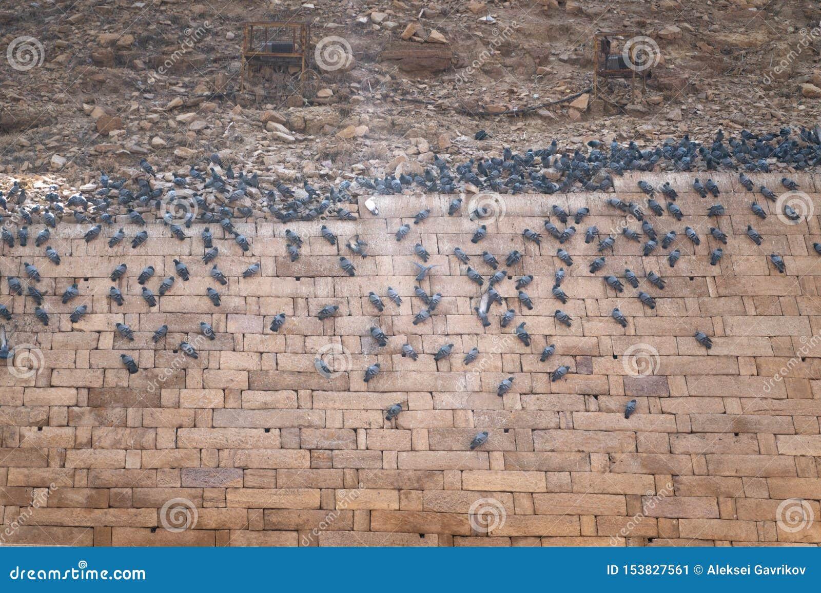 Vogels die op de fortmuur zitten