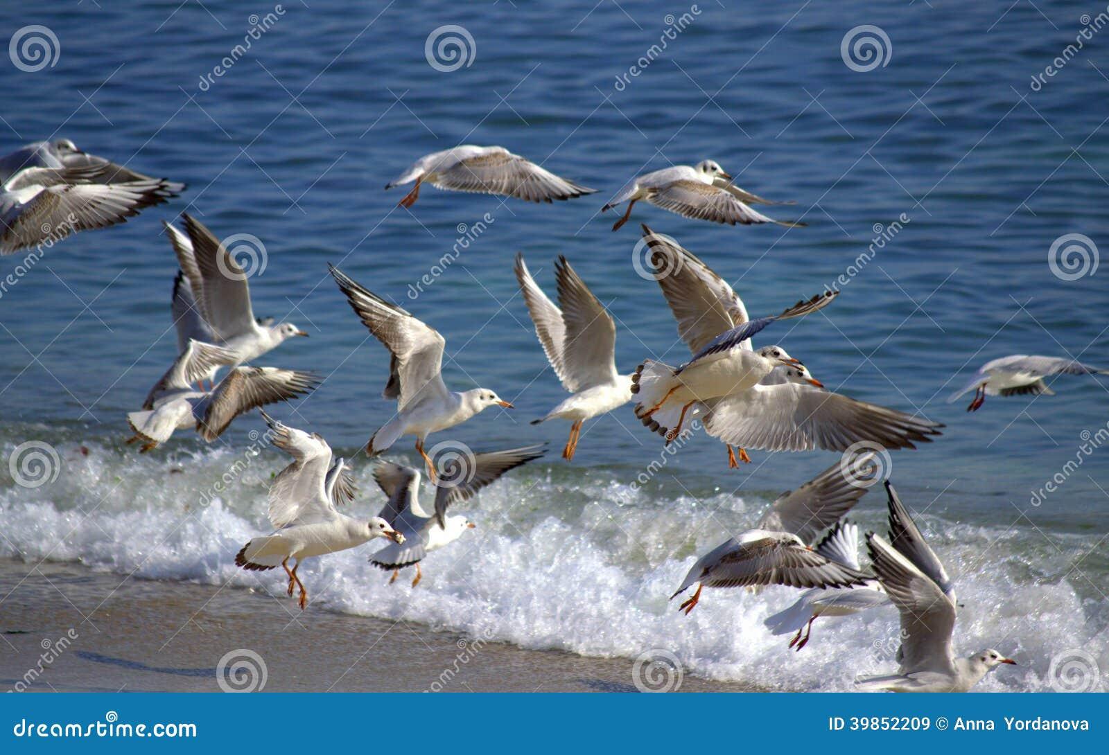 Vogels die uit strand vliegen