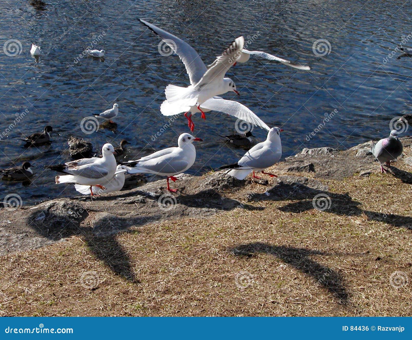 Vogels en schaduwen