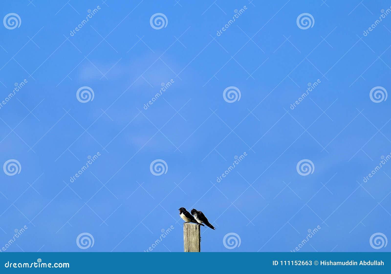 Vogels met de blauwe hemel