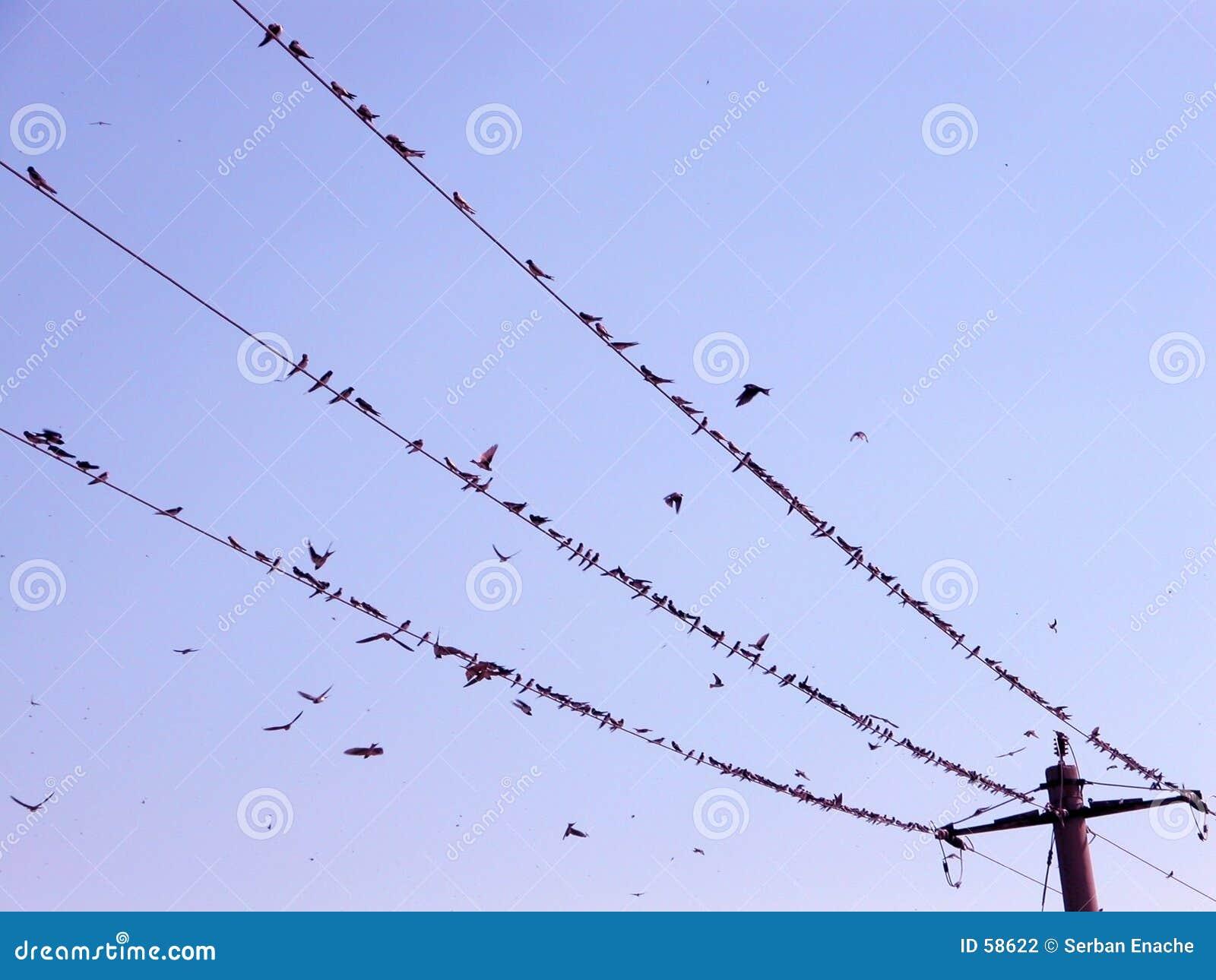 Vogels op de draad