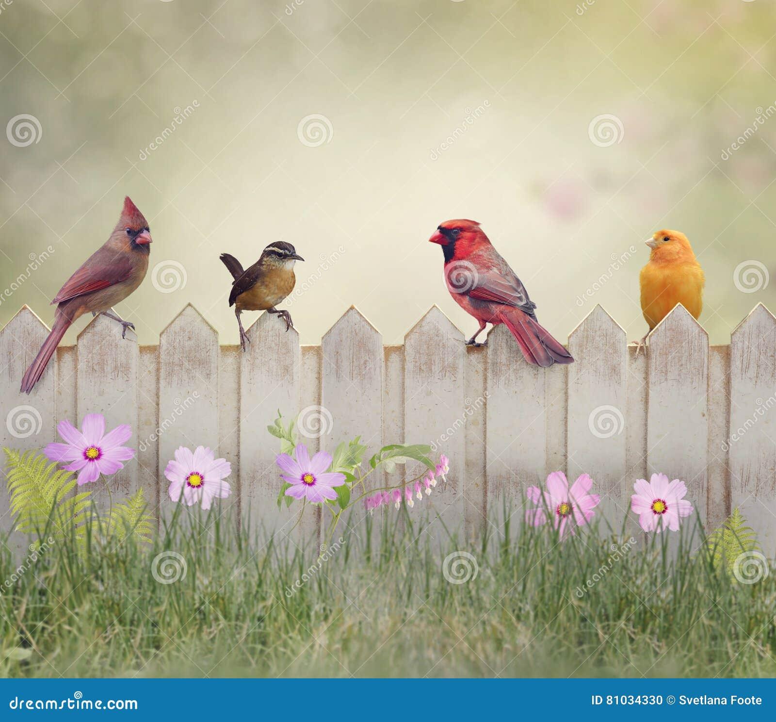 Vogels op de omheining