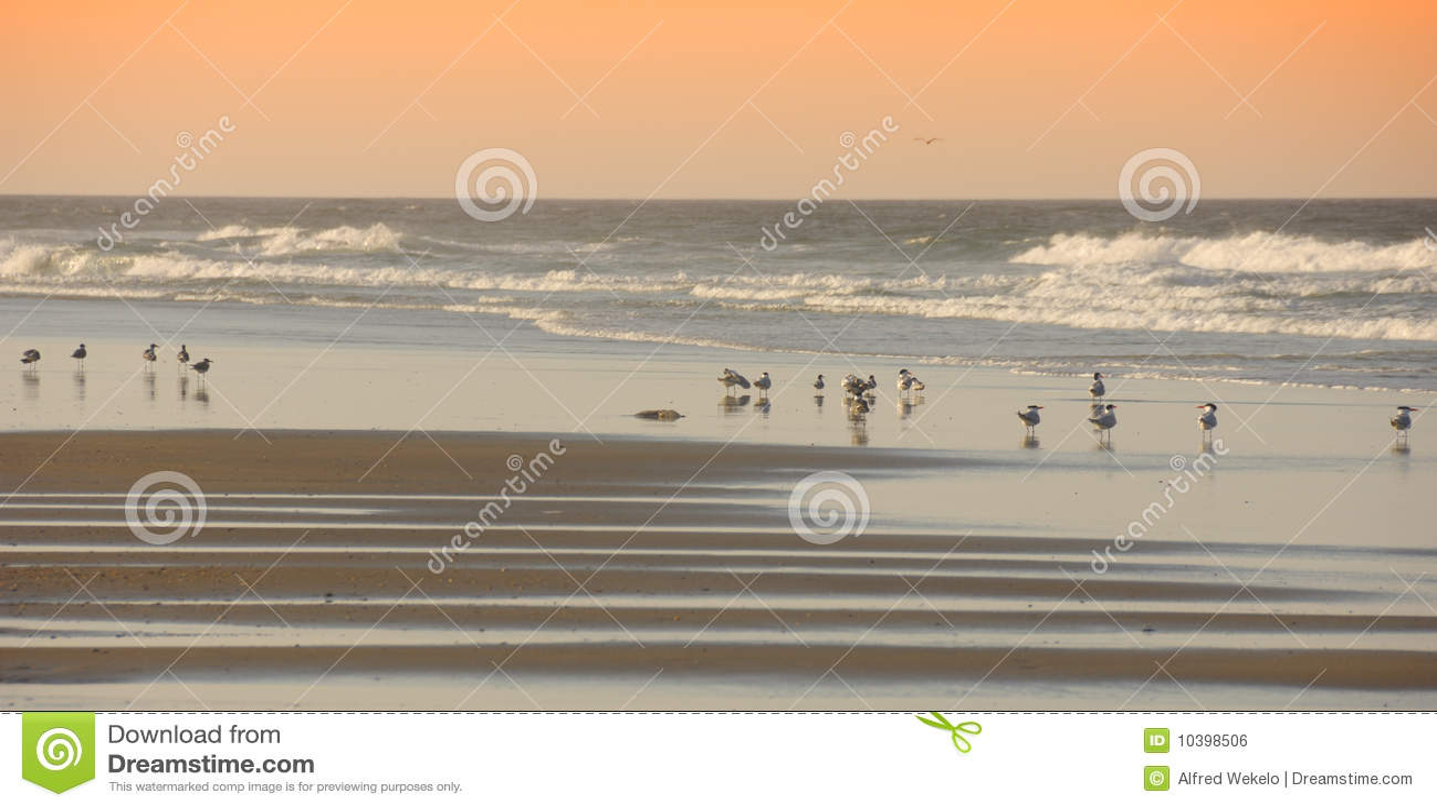 Vogels op het Strand Outerbanks Noord-Carolina