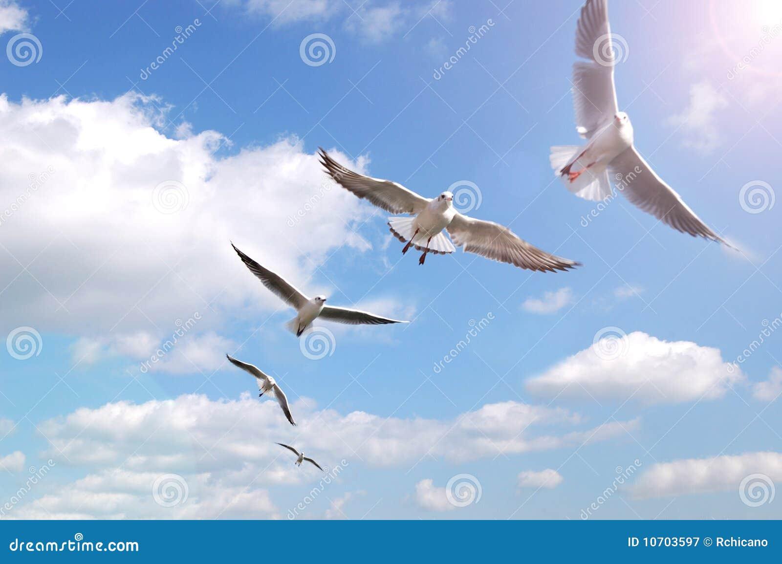 Vogels op lucht