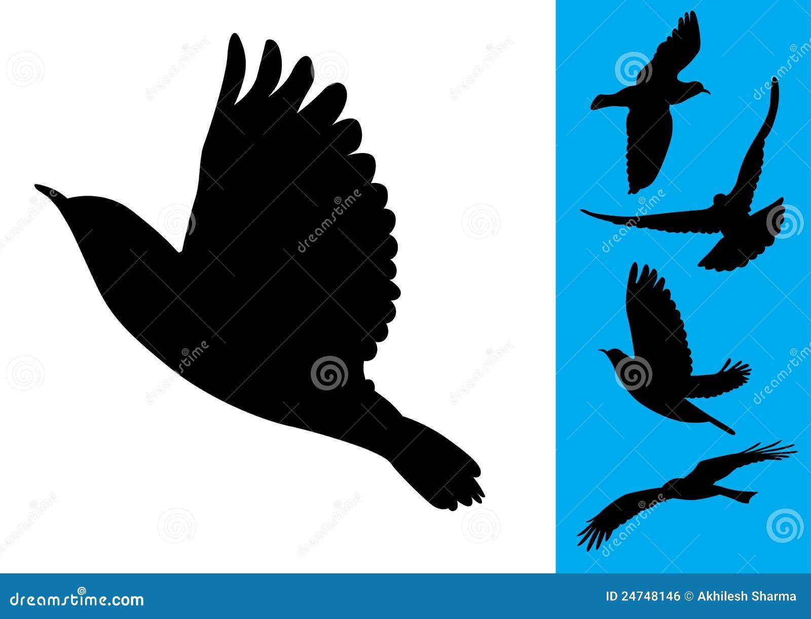 Vogels tijdens de vlucht - Vector