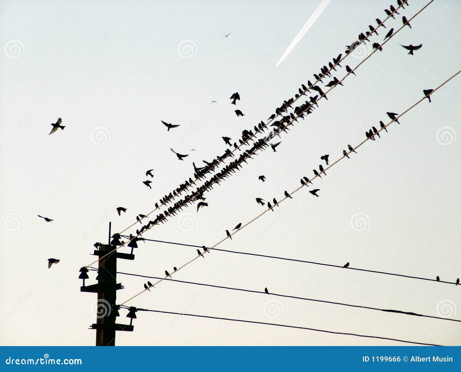 Vogels van een draad en het vliegende vliegtuig
