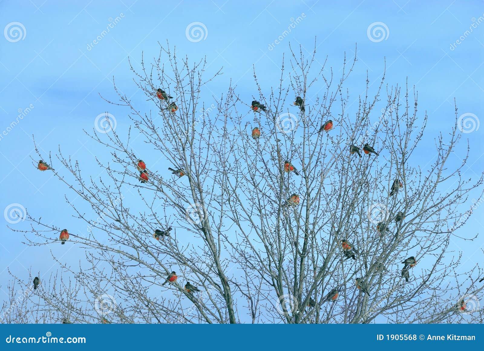 Vogels van een Troep van de Veer samen
