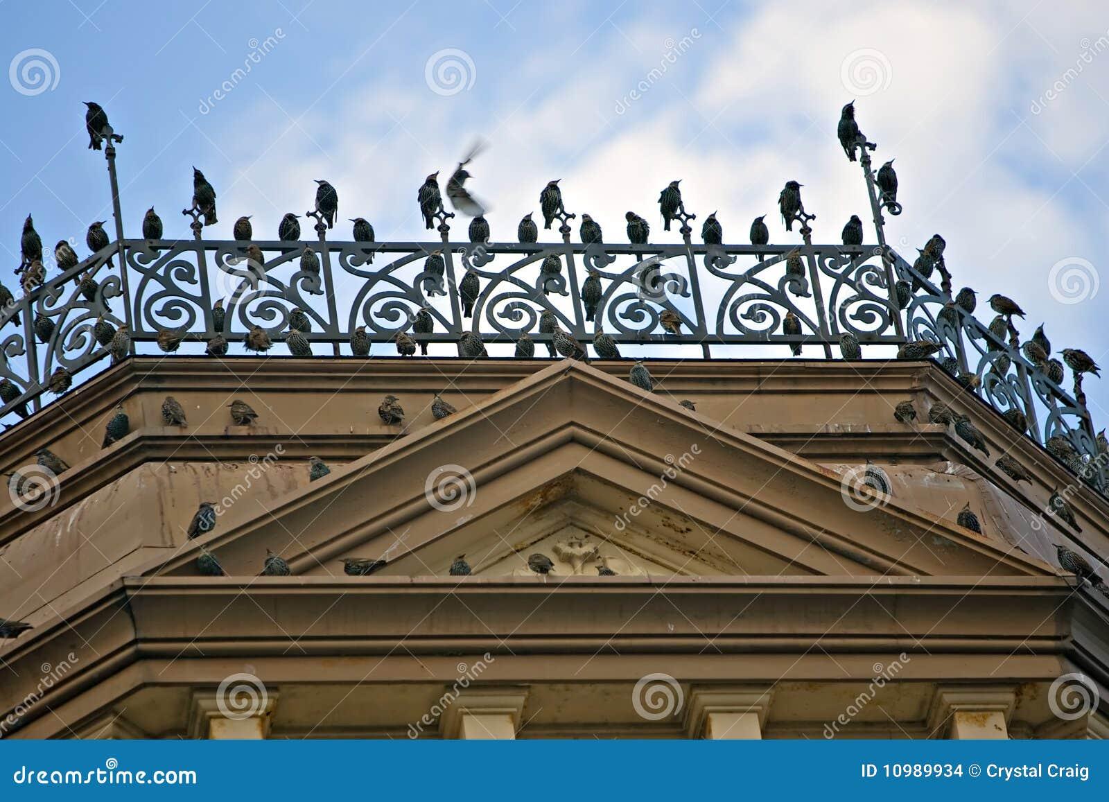 Vogels van een veerstok samen