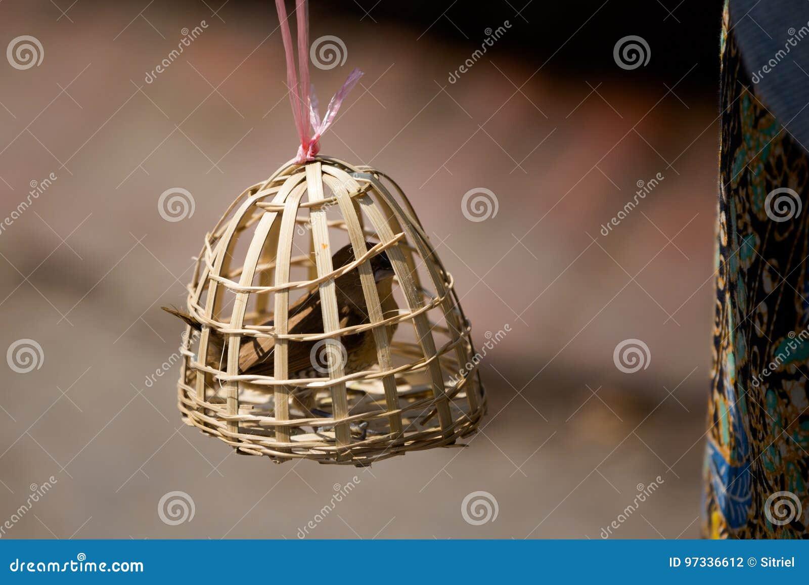 Vogelslaaf in bamboekooi