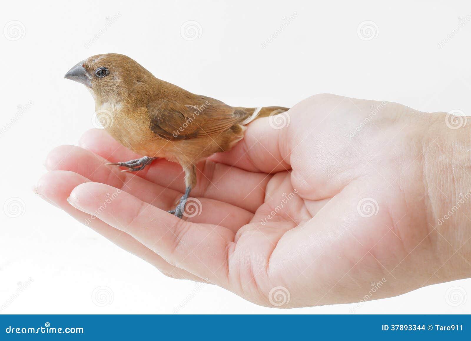 Vogeltribune op hand