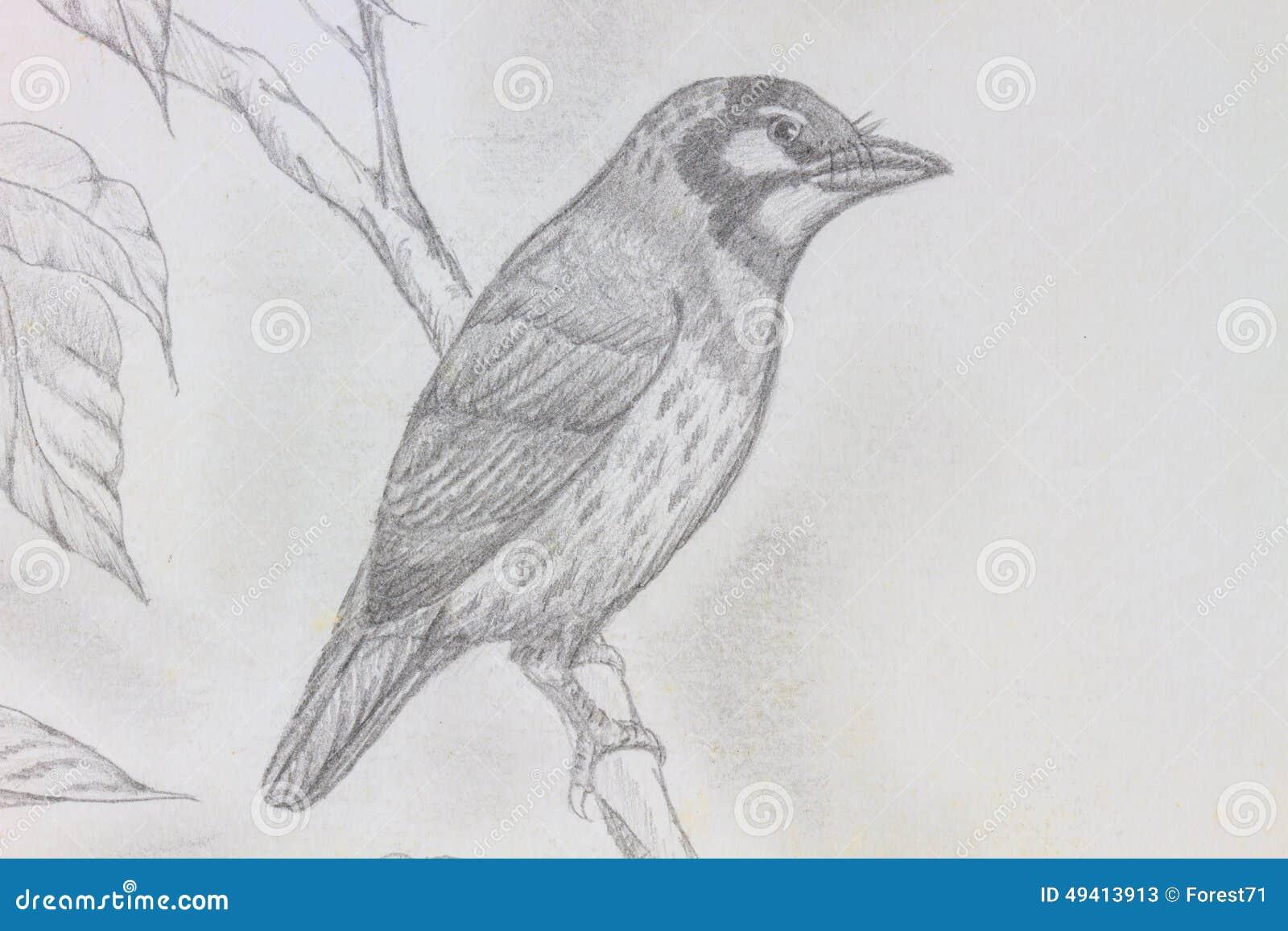 Download Vogelzeichnung stock abbildung. Illustration von zeile - 49413913