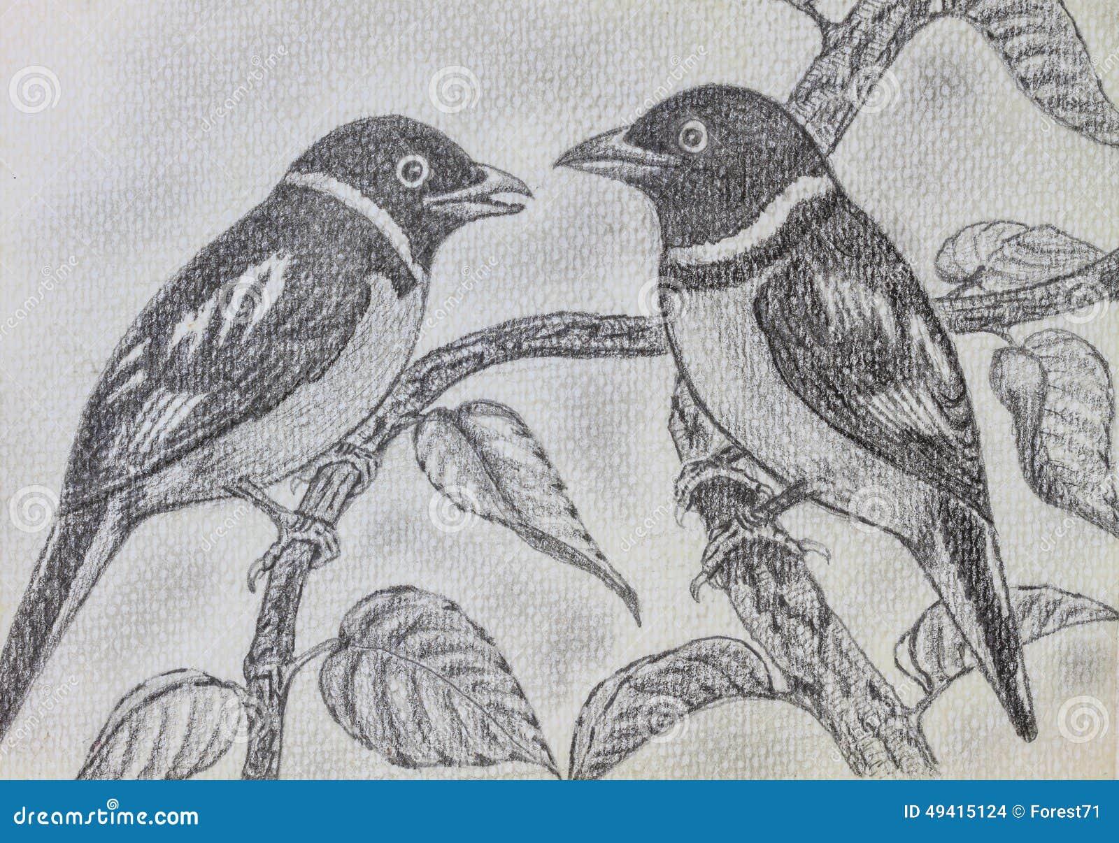 Download Vogelzeichnung stockfoto. Bild von vogel, tier, schattenbild - 49415124