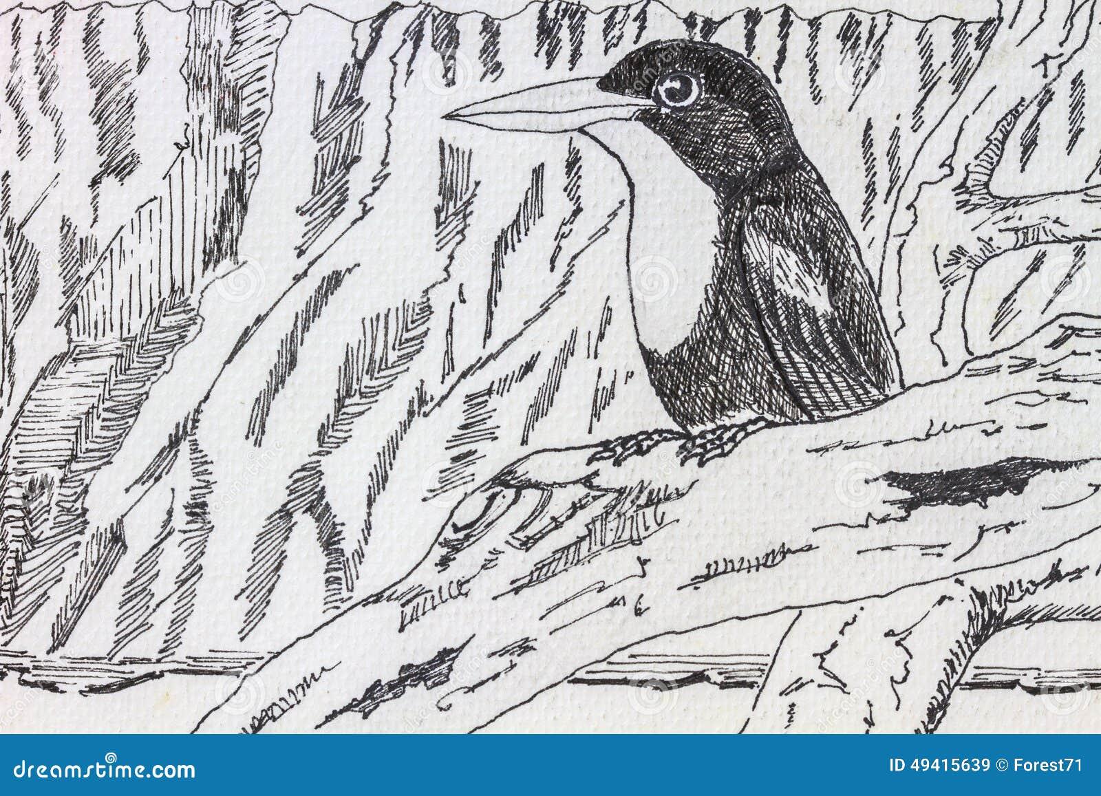 Download Vogelzeichnung stockbild. Bild von hintergrund, getrennt - 49415639