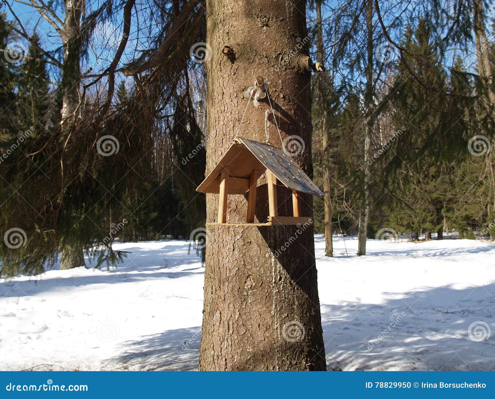 Vogelzufuhr auf einem Baum im Winterholz