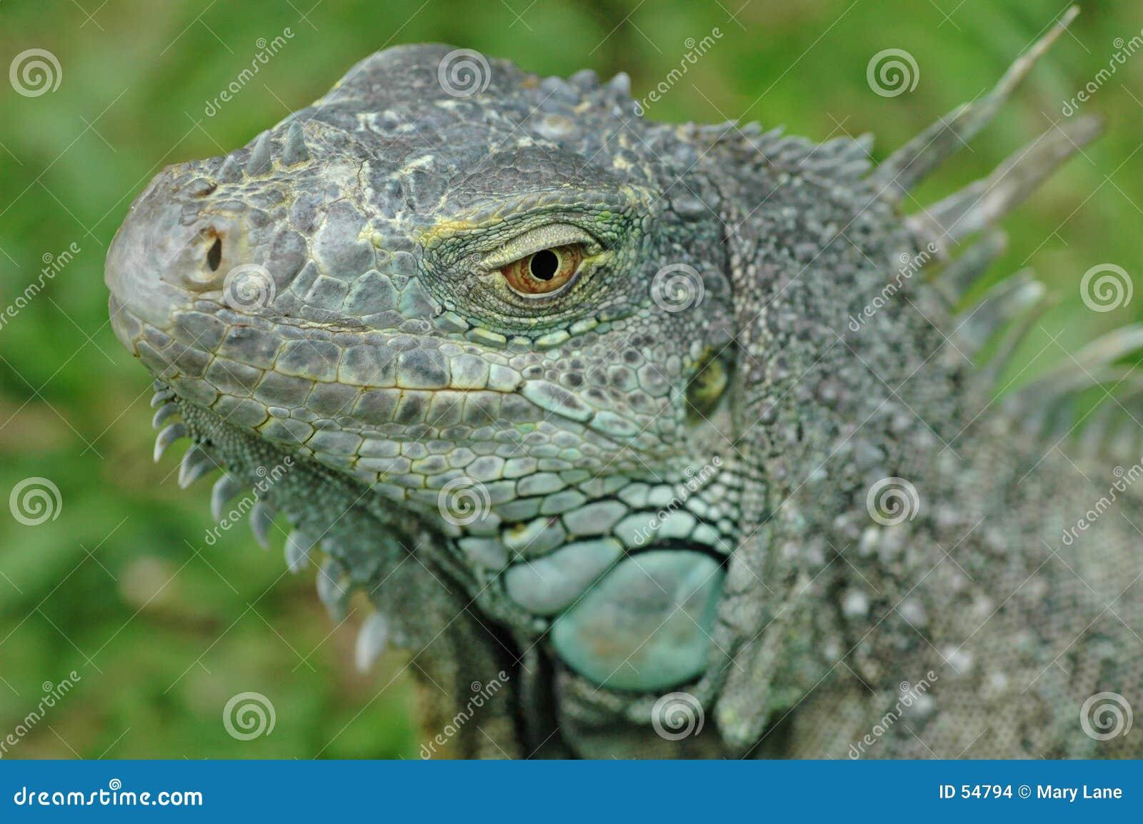 Voici des dragons