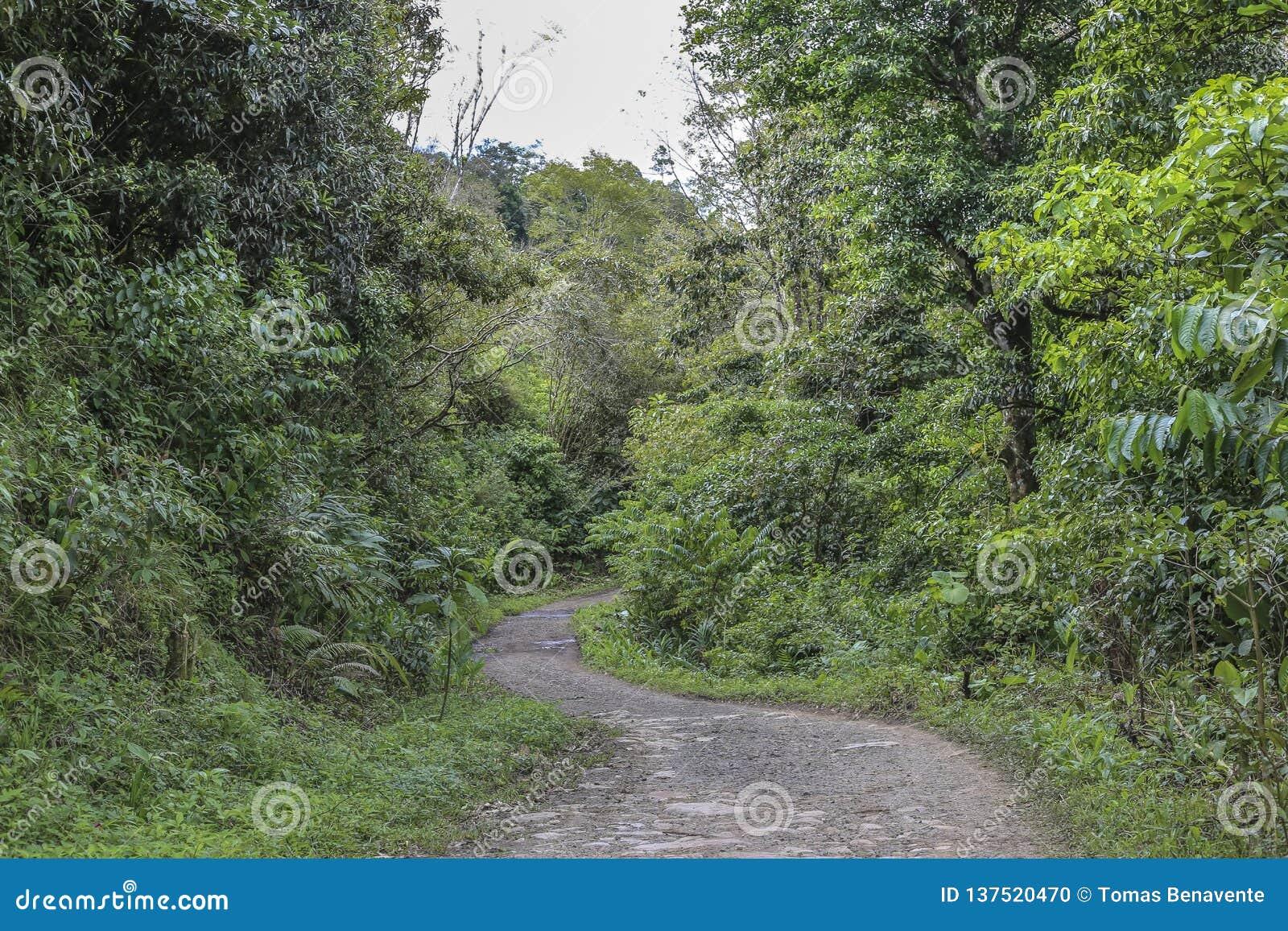 Voie d accès à la réservation naturelle de massif de Peñas Blancas, Nicaragua