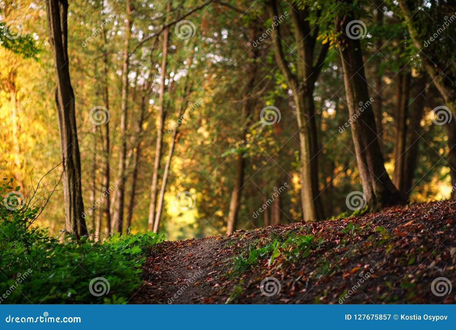 Voie de forêt avec les feuilles tombées sur le fond des arbres
