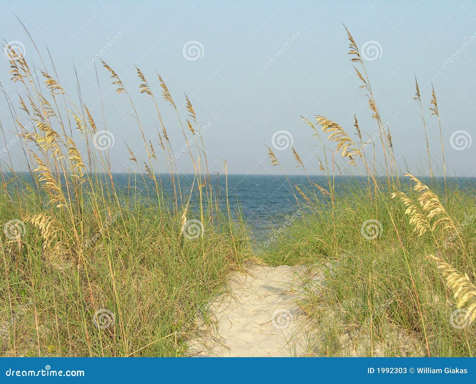 Voie de plage