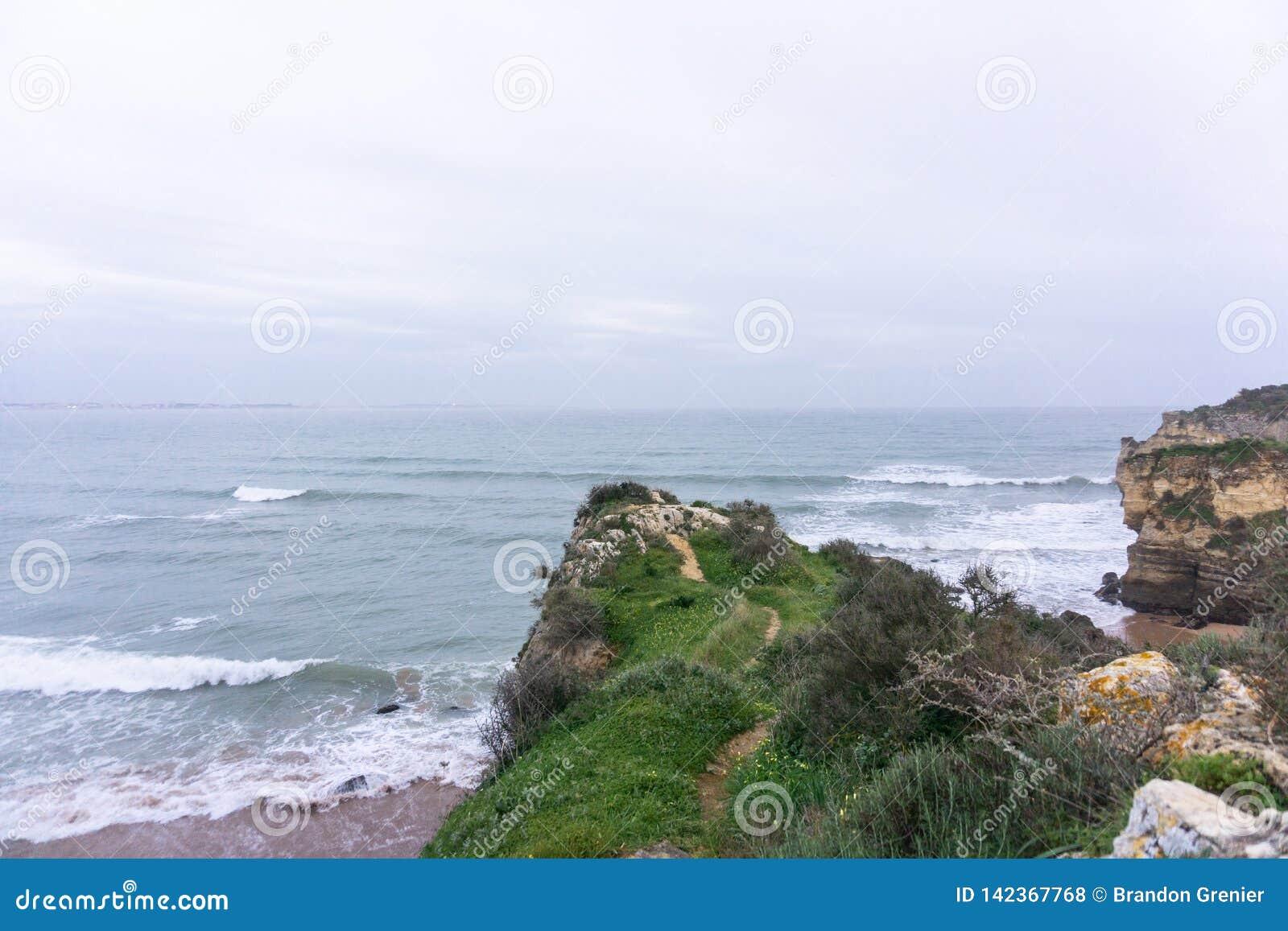 Voie herbeuse de falaise d océan
