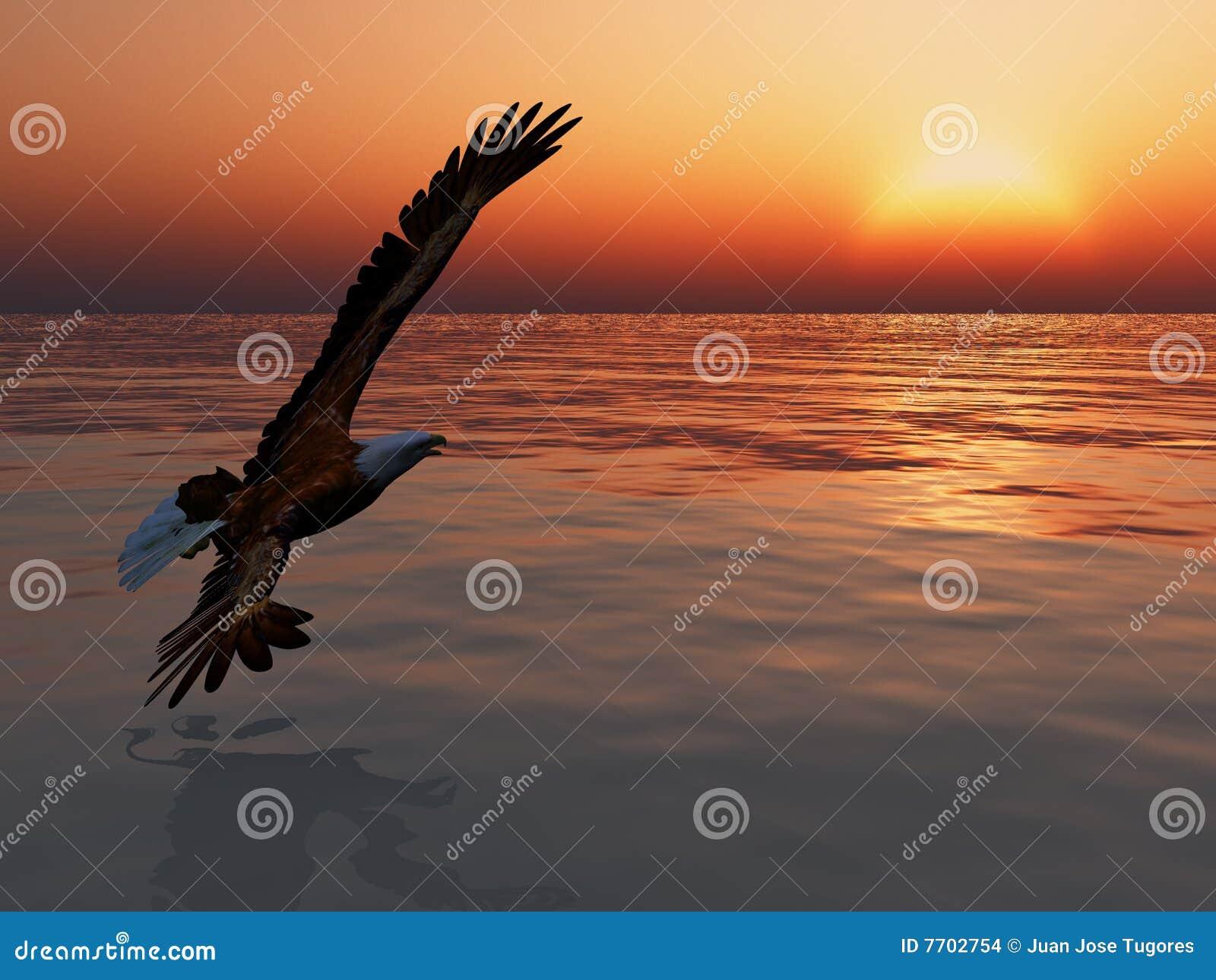 Vol d aigle
