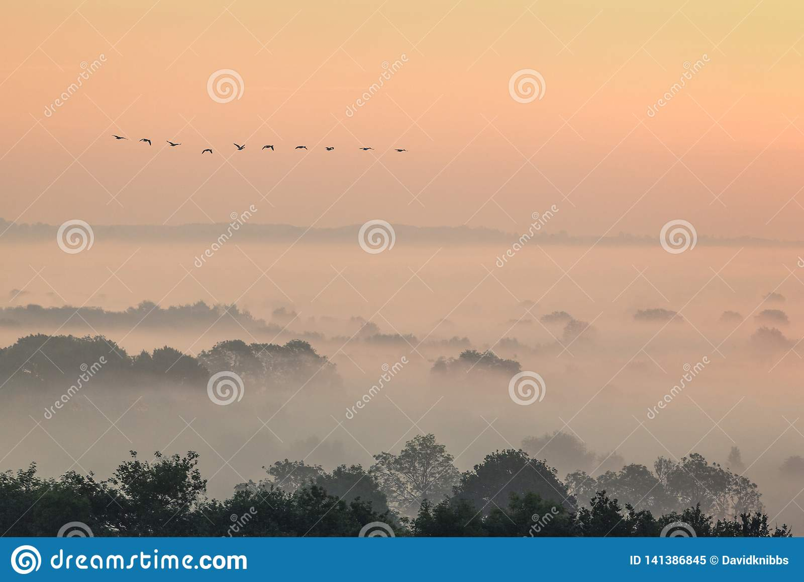 Vol d oies de migration au-dessus d un paysage brumeux dans Evesham Worcestershire