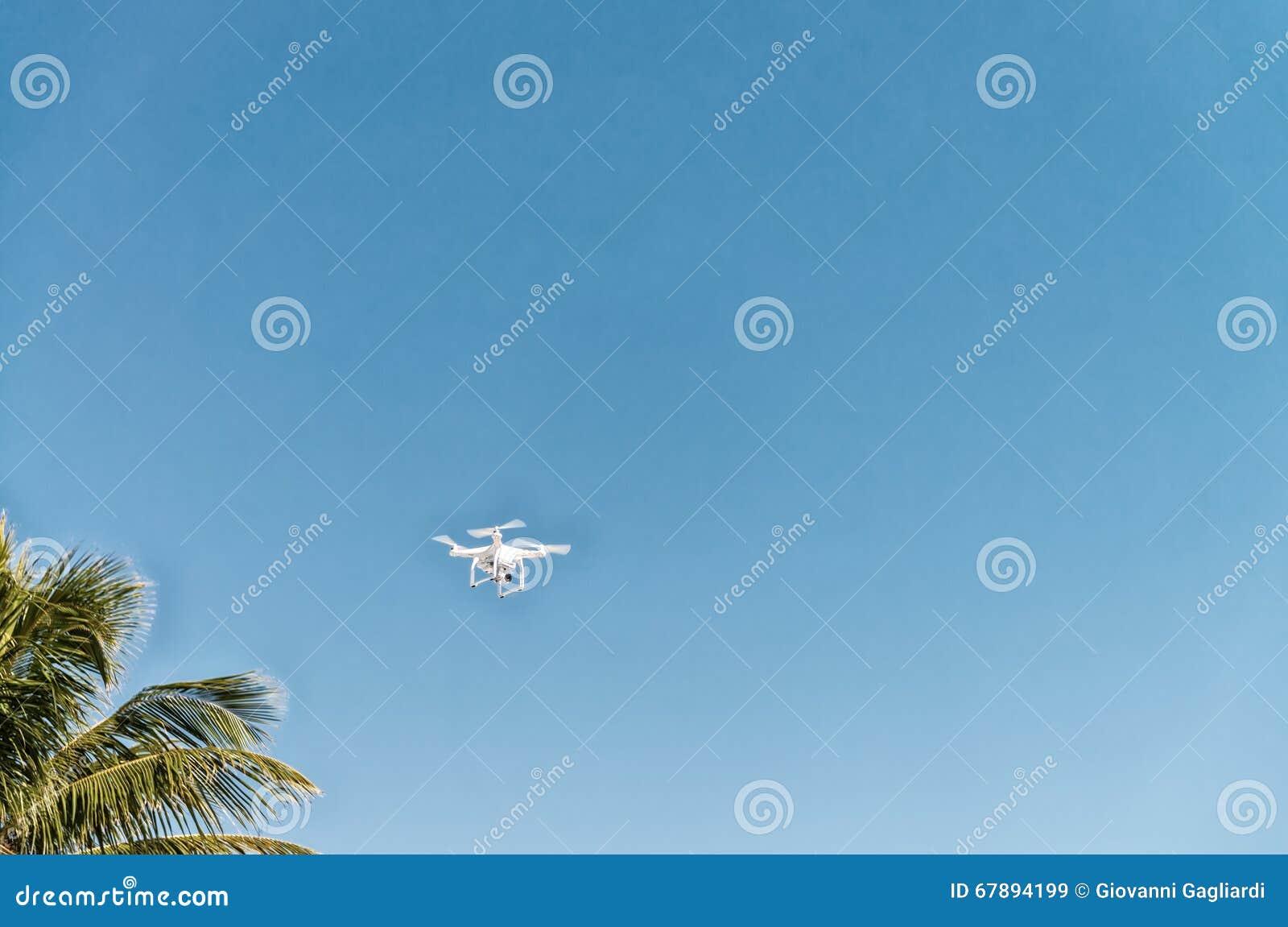 Vol de bourdon dans l environnement naturel Copyspace
