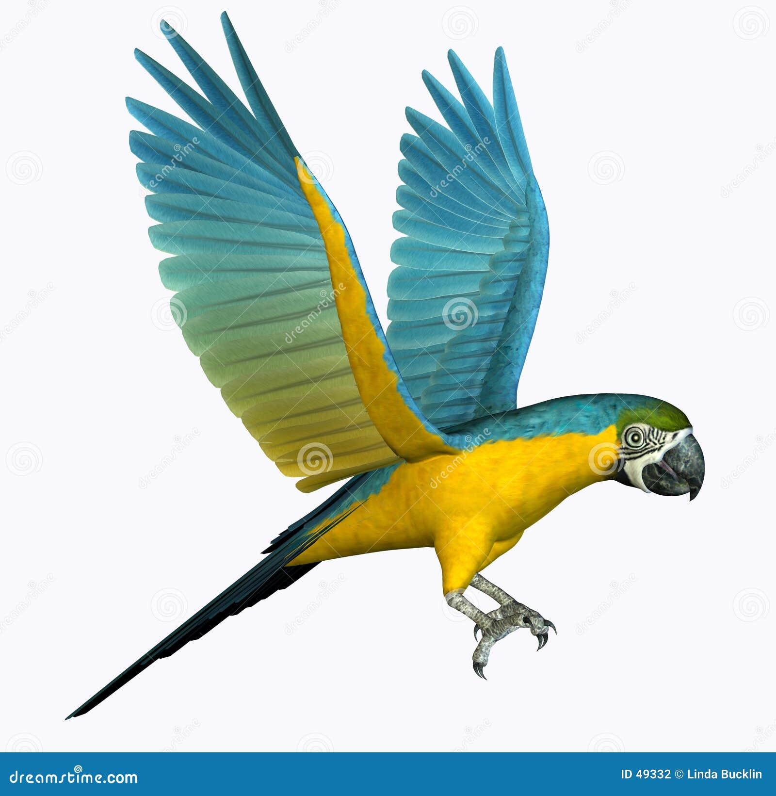 Vol de Macaw