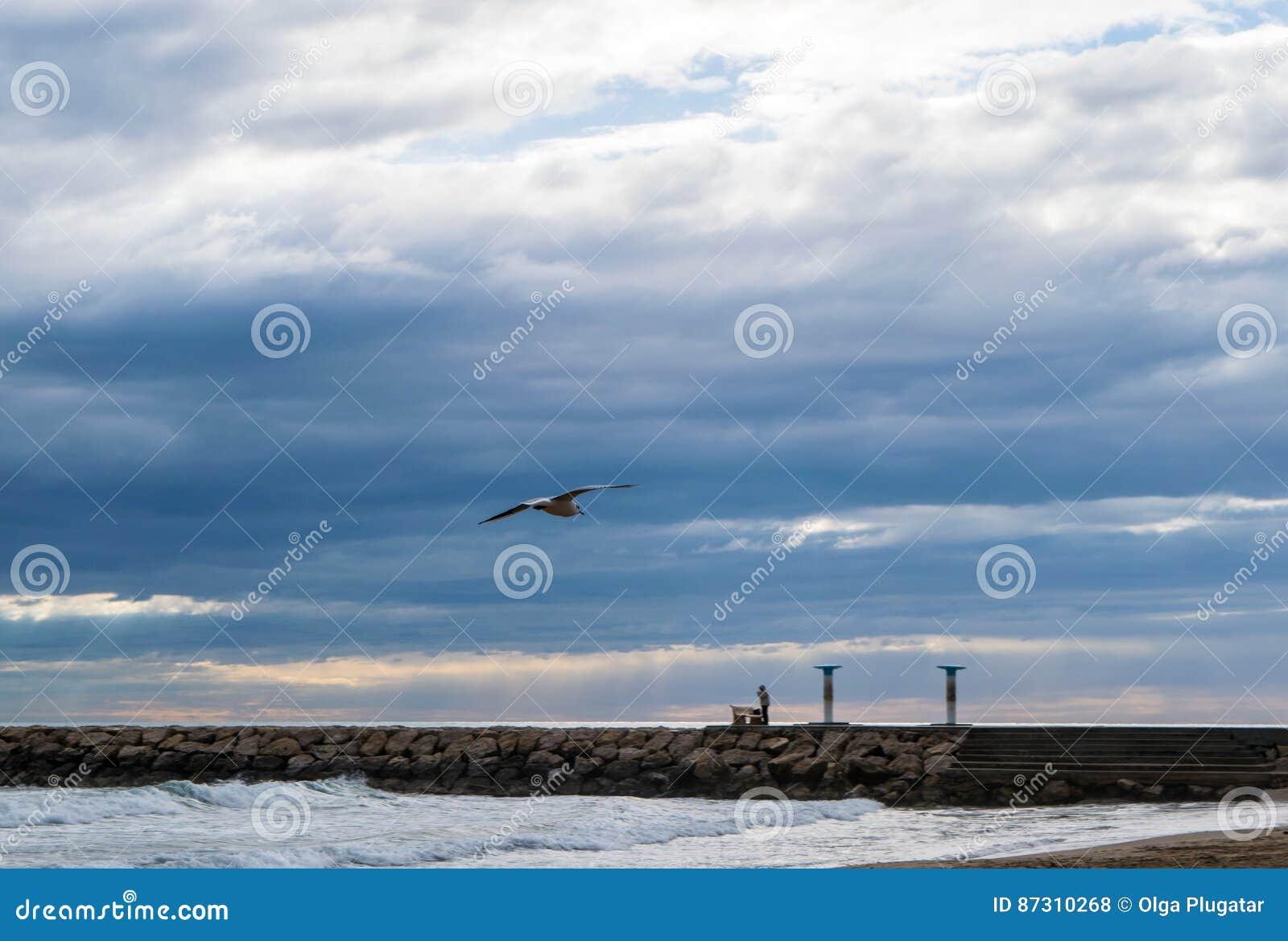 Vol de mouette contre le ciel nuageux dramatique bleu
