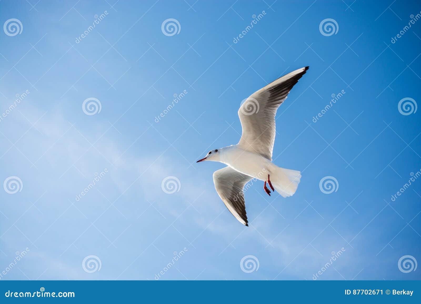 Vol de mouette en ciel au-dessus des eaux de mer