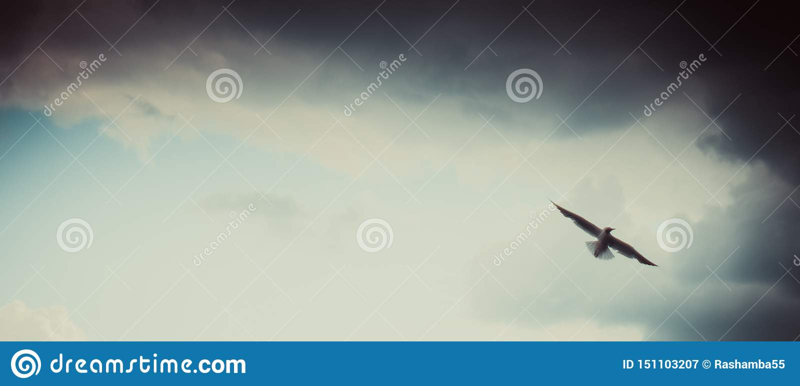 Vol de mouette sur le beau ciel bleu nuageux