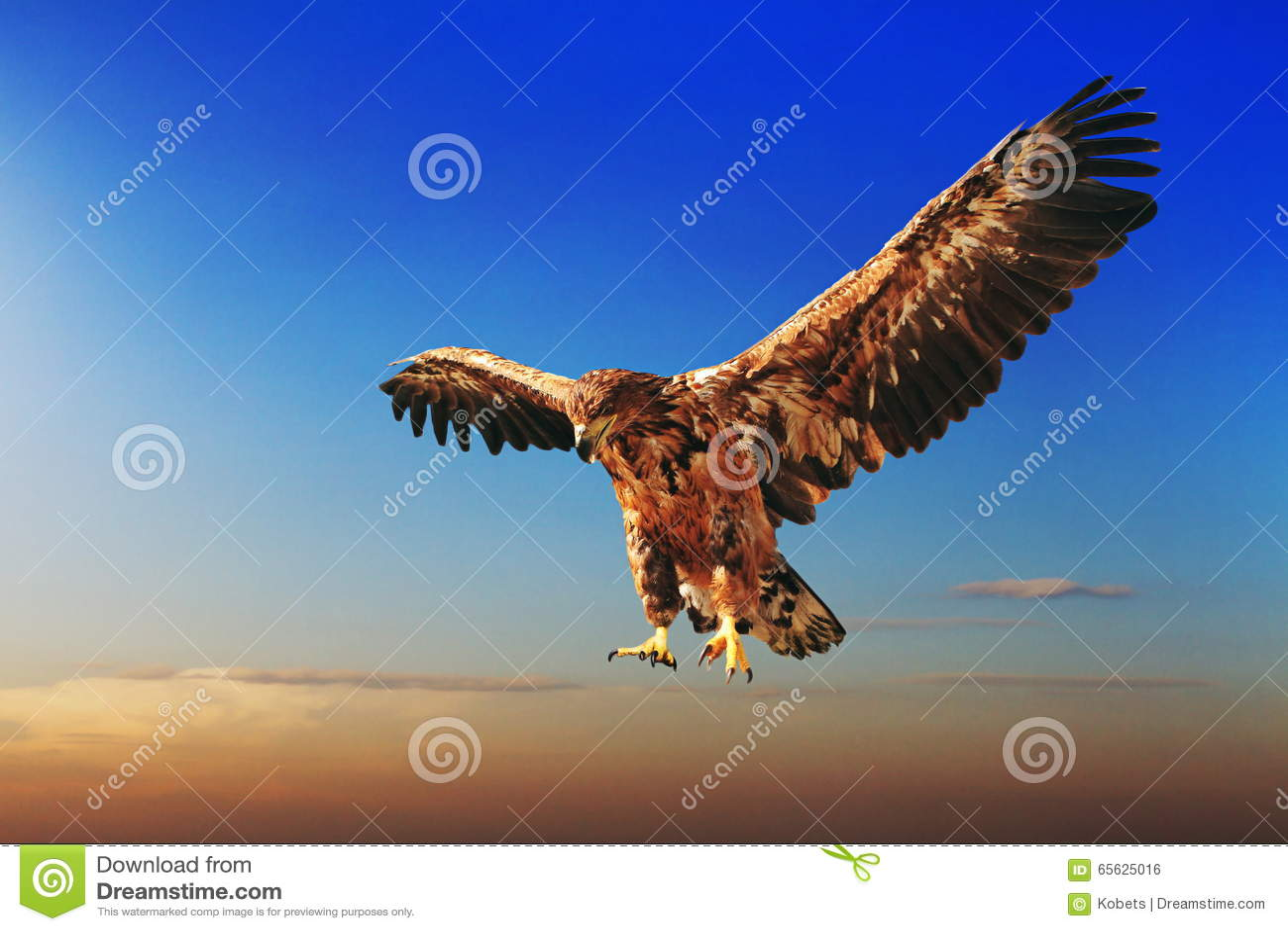 Vol Eagle