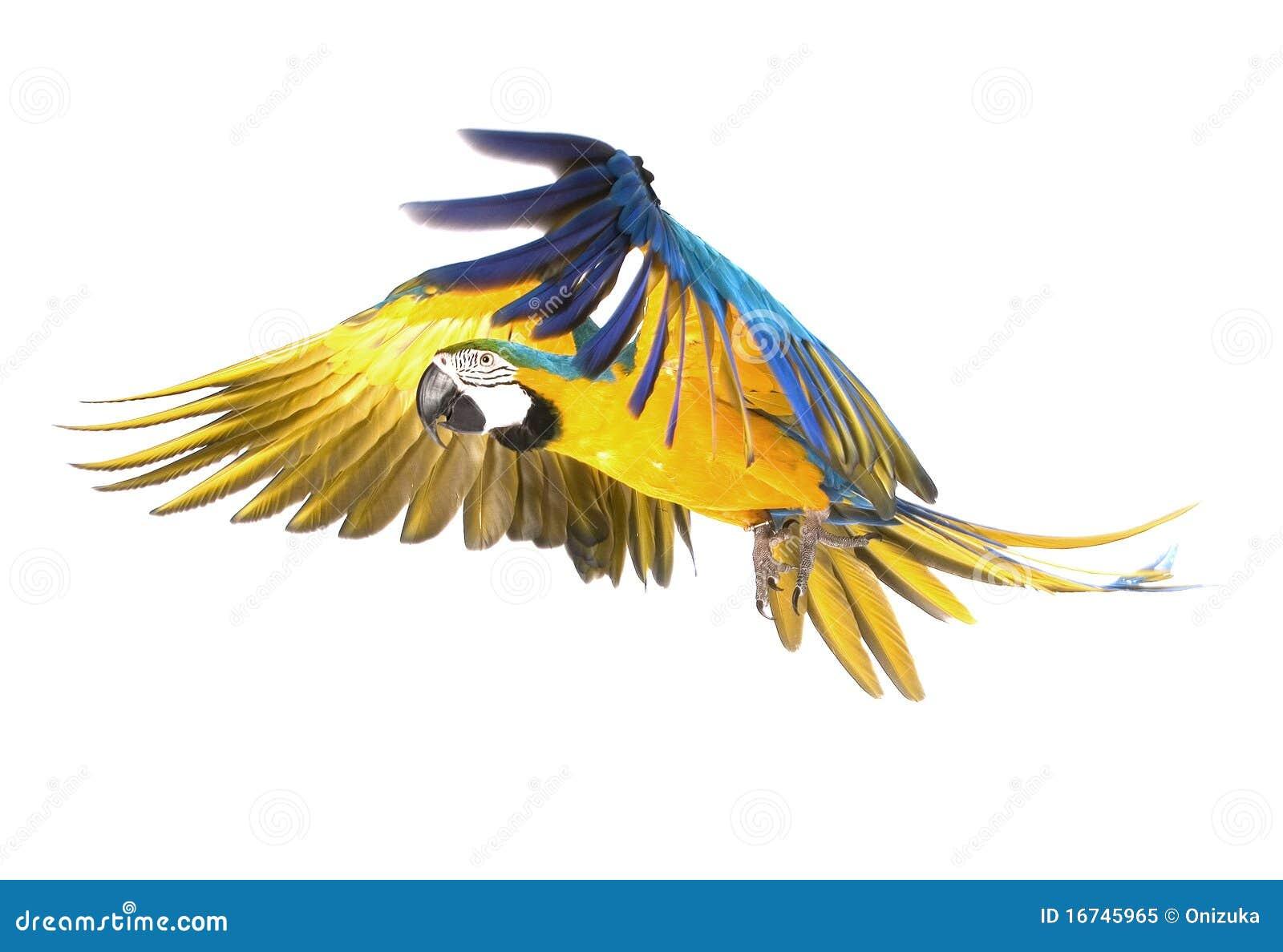 Vol lumineux de perroquet d ara