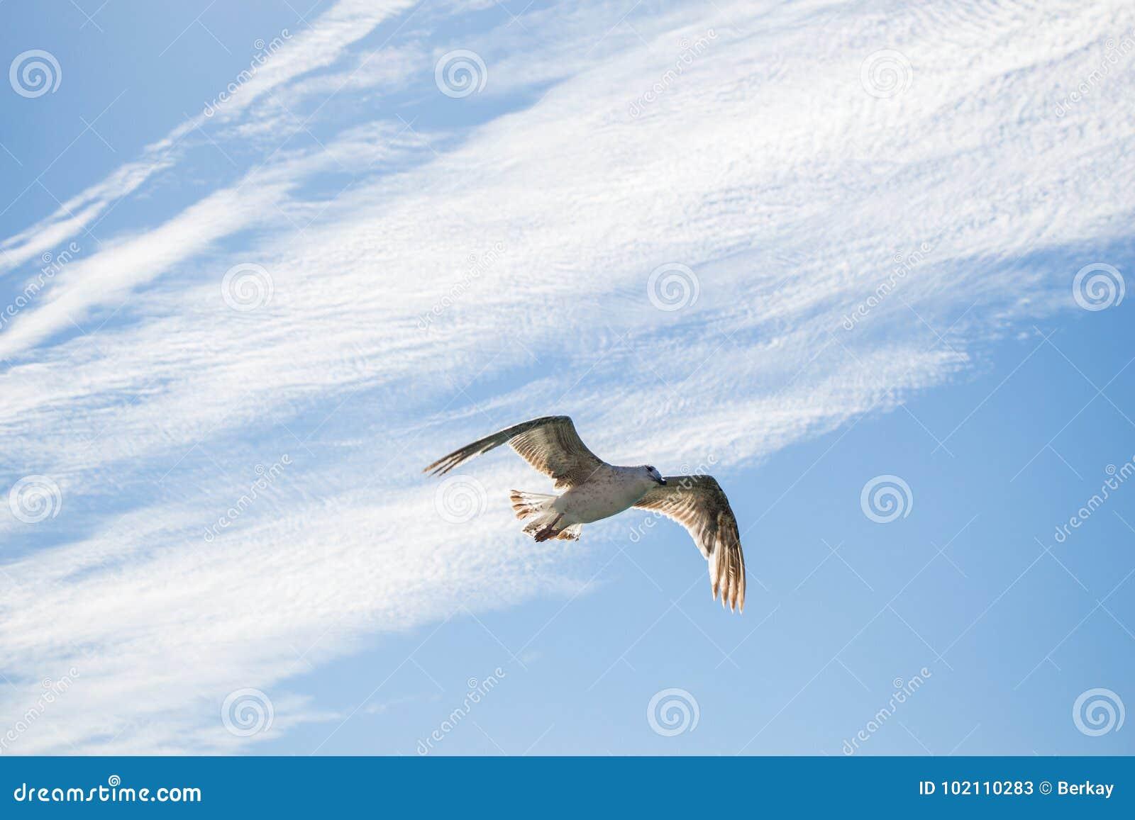 Vol simple de mouette dans le bleu nuageux un ciel