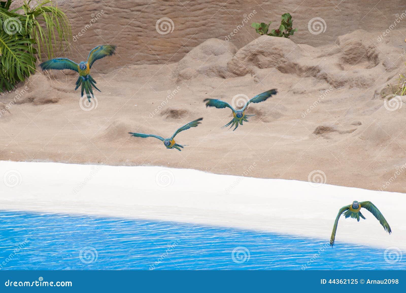 Volata dei pappagalli