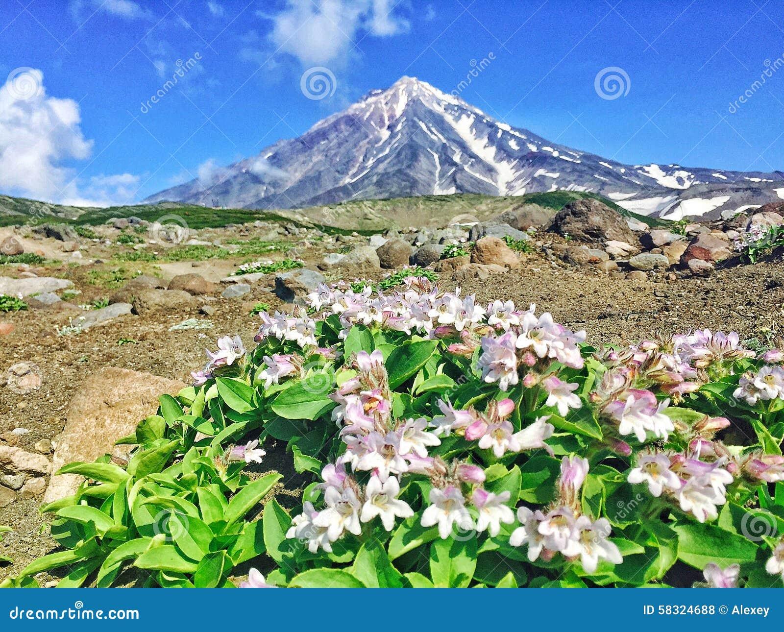 Volcan d Avacha, le Kamtchatka, Russie