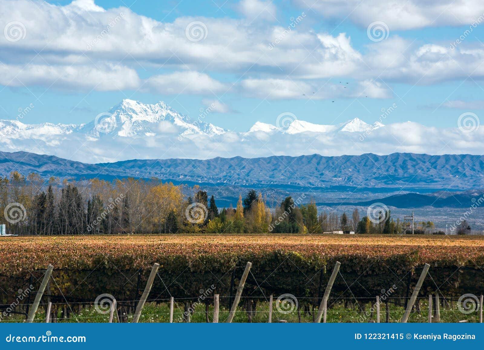 Volcano Aconcagua Cordillera and Vineyard in the Argentine province of Mendoza
